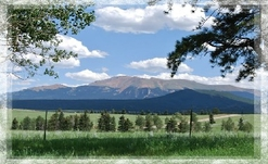 Colorado Mountain Property For Sale