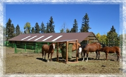 Colorado Horse Property For Sale