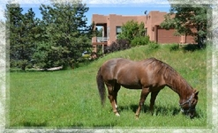 Colorado Equestrian Ranches For Sale