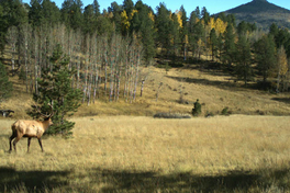 Colorado Hunting Ranches for Sale For Sale
